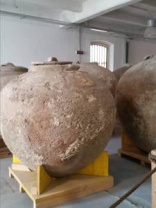 Uno dei dolia di Diano Marina nel Museo Navale di Imperia